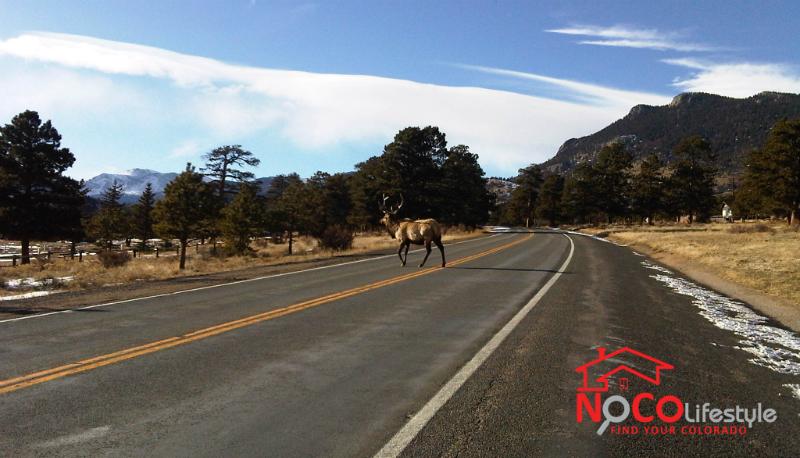 elk_road_nocolifestyle