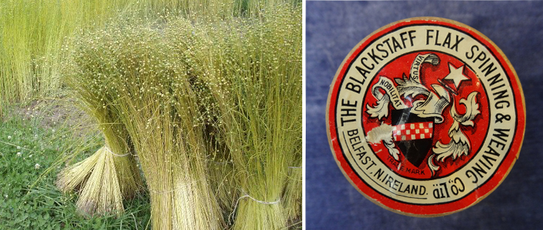 Raw-Flax-and-a-label-from-the-Blackstaff-Spinning-and-weaving-company