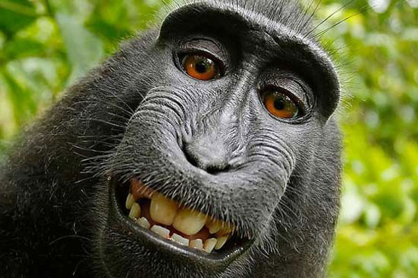 Indonesia's selfie-snapping monkey named 'Person of the Year'