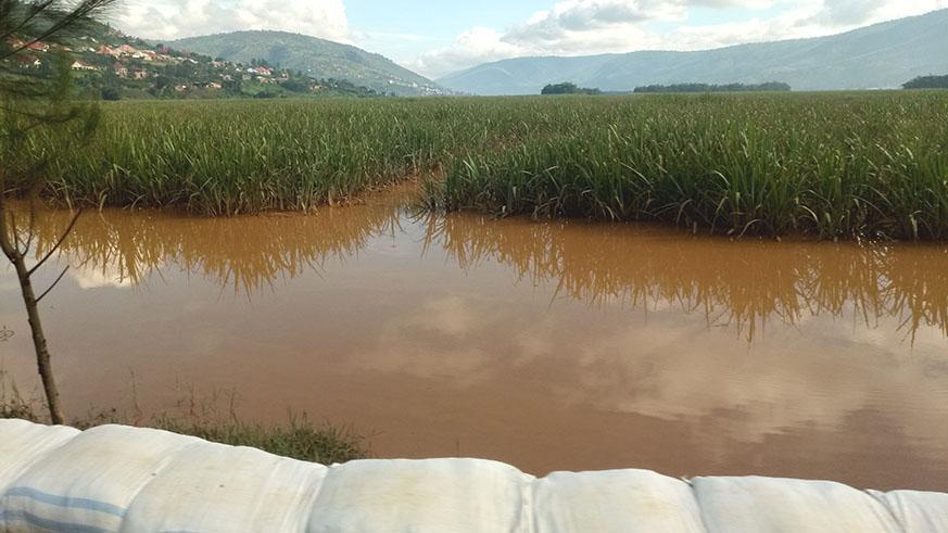 Crops worth Rwf4bn destroyed by heavy rains