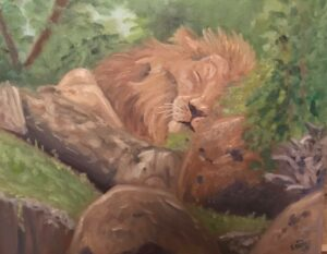 Napping Lion: 16 x 20 Oil