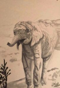 Elephant: 9 x 12 Ink Wash
