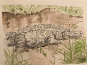 Alligator: 9 x 12 Watercolor