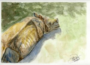 Rhino: 9 x12 Watercolor