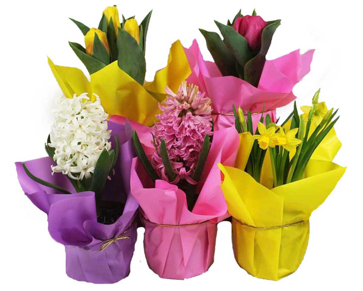 Featured Product of the Week... Assorted Bulbs!