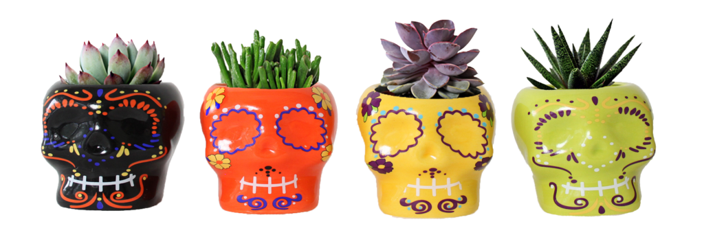 Featured Product of the Week... Day of the Dead Succulents!
