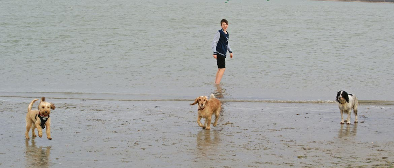Walking three dogs on the beach