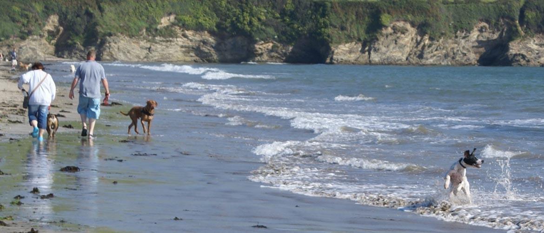 Dog walking on the beach - chasing sea gulls