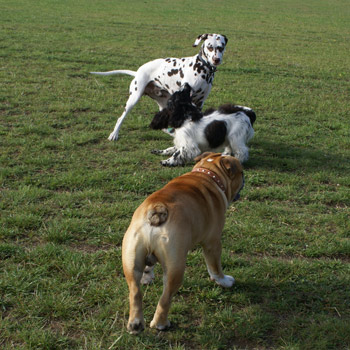 A great field for dog walking