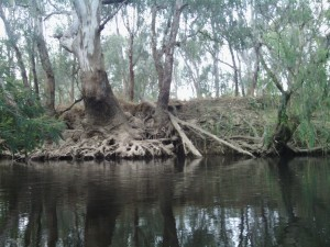 King River Oxley