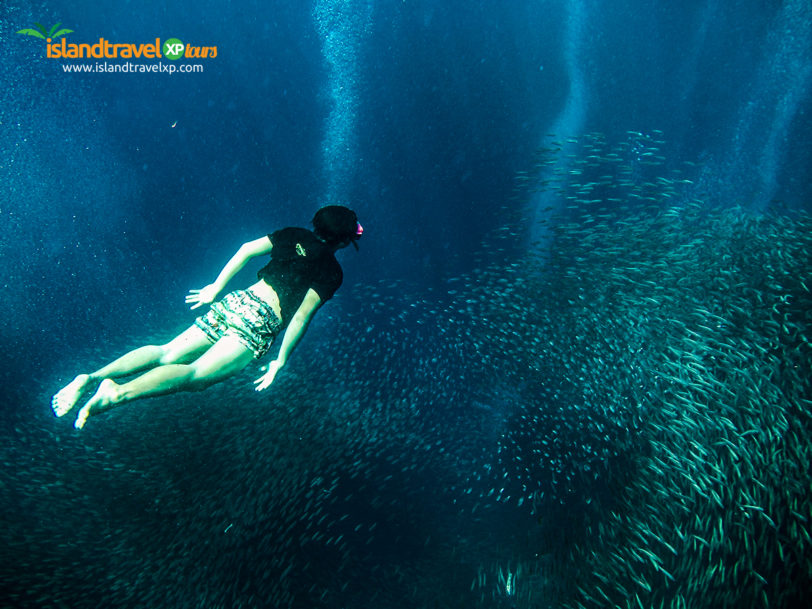 Sardine Run in Moalboal