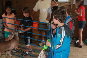 Some Yellow Peppers feed the goats while the rest of the group checks out the other animals