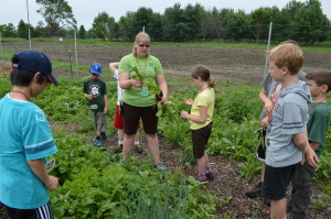 """The """"butterflies"""" learn about radishes from Ms. Andrea"""