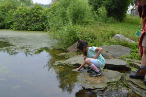 """A """"caterpillar"""" scoops water from the pond to study"""