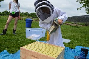 Putting smoke on the bees calms them down to work on the hive.