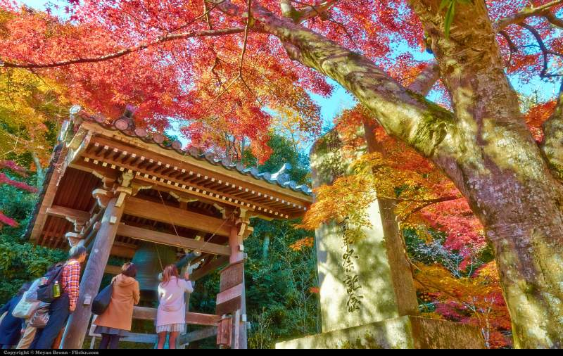 kyoto nisonin temple autumn
