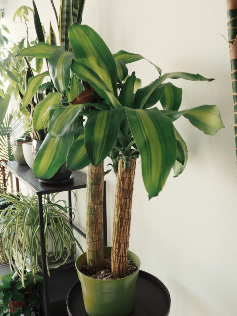 air cleaning plants