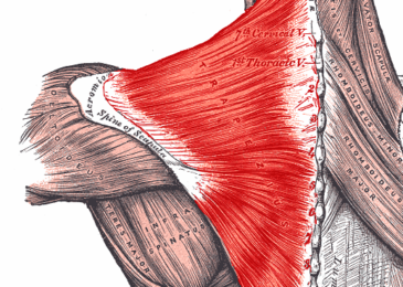 Pain-In-The-Neck Alternative Therapies
