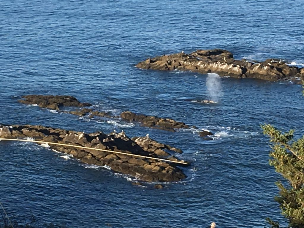 Whales at the lighthouse