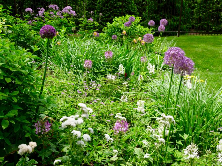 Mixed Spring Garden