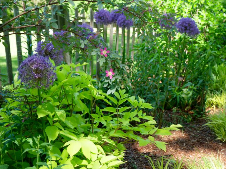 Spring Garden Featuring Allium & Aralia