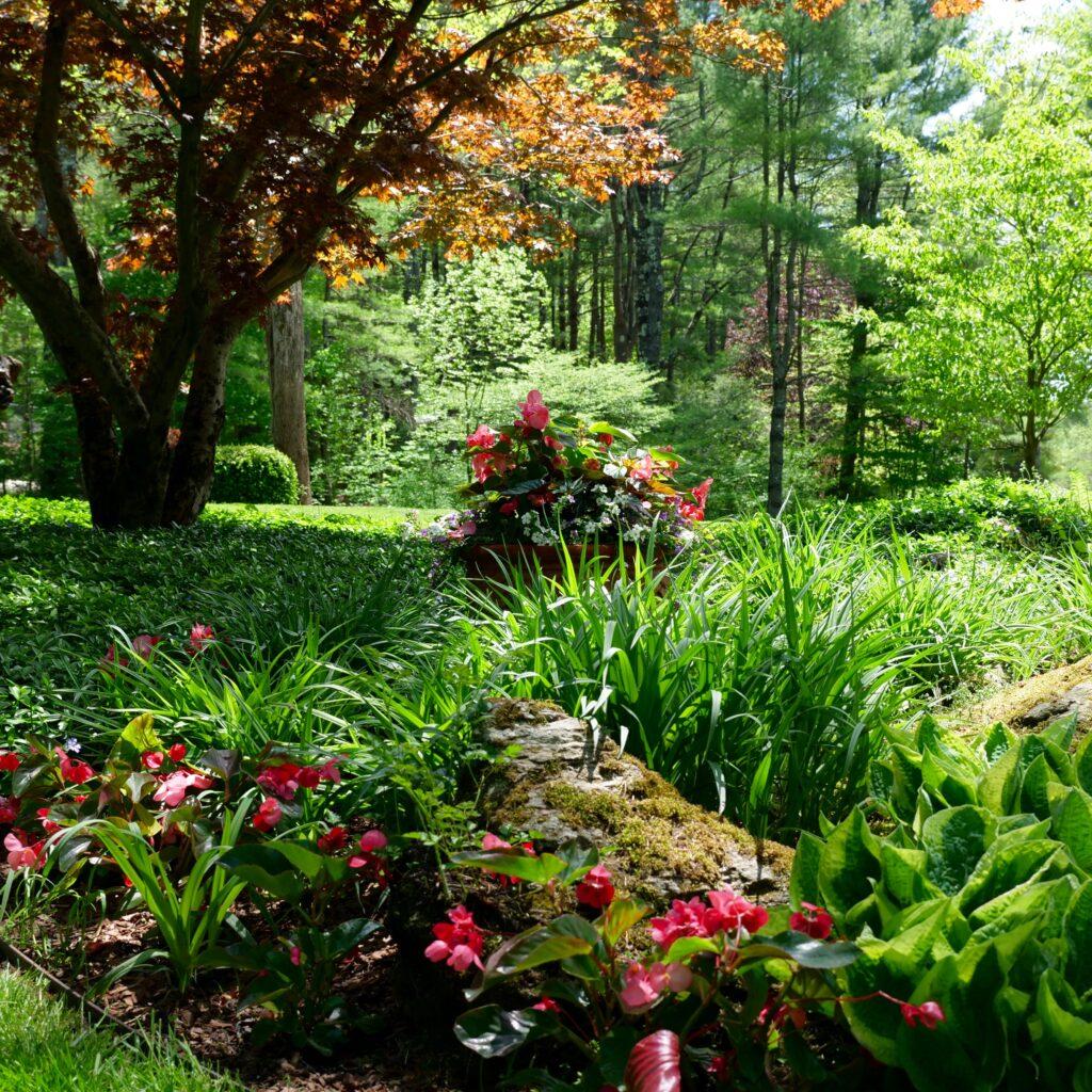 Spring Shade Garden with Begonia Pot