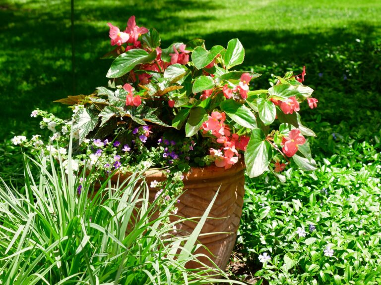 Shade Container Garden in Garden Bed