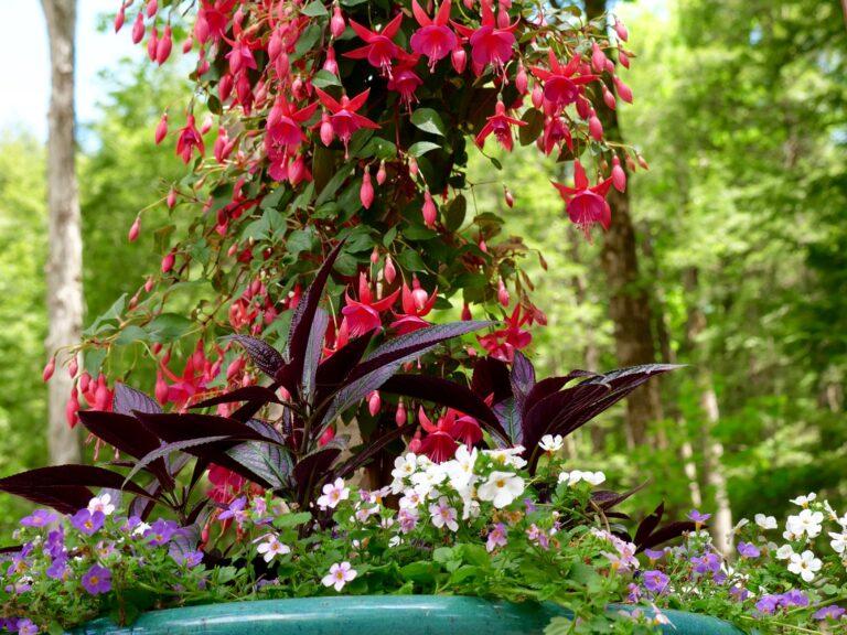 Fuchsia Shade Container Garden