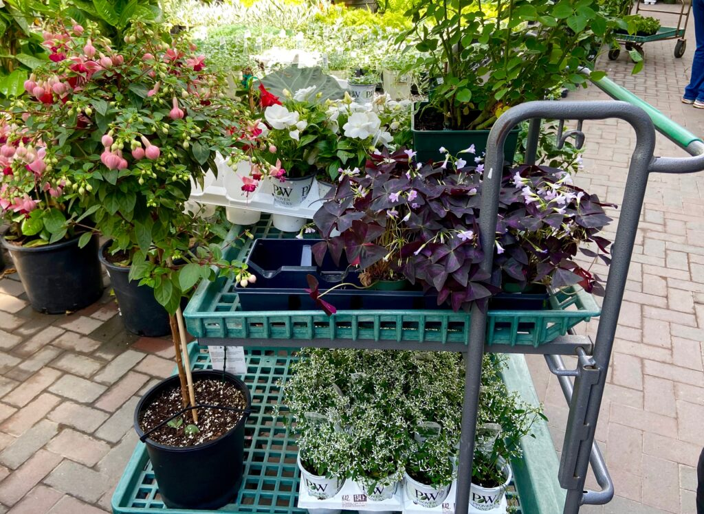 Shopping Cart full of Annual Plants