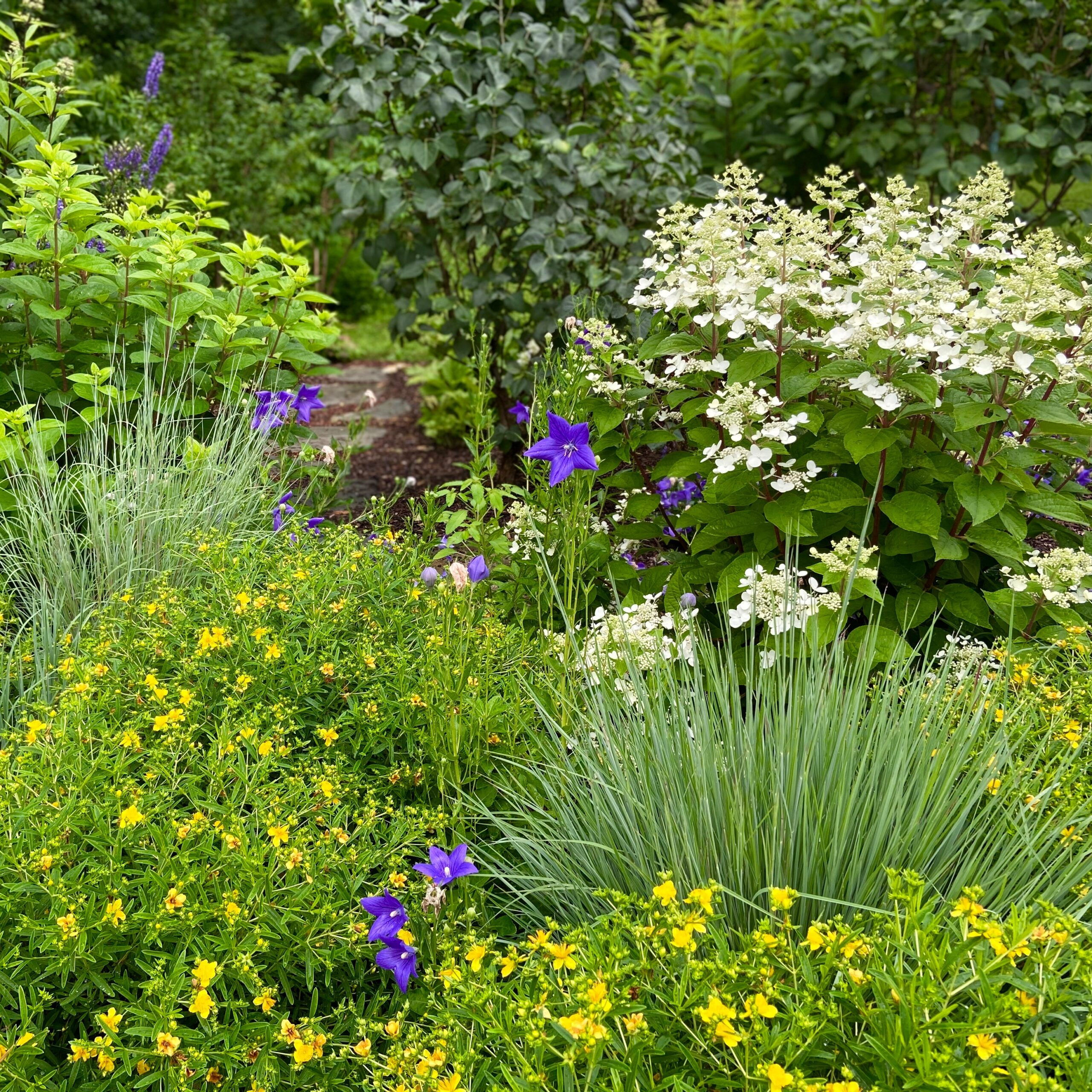 Read more about the article More than a Screening Garden