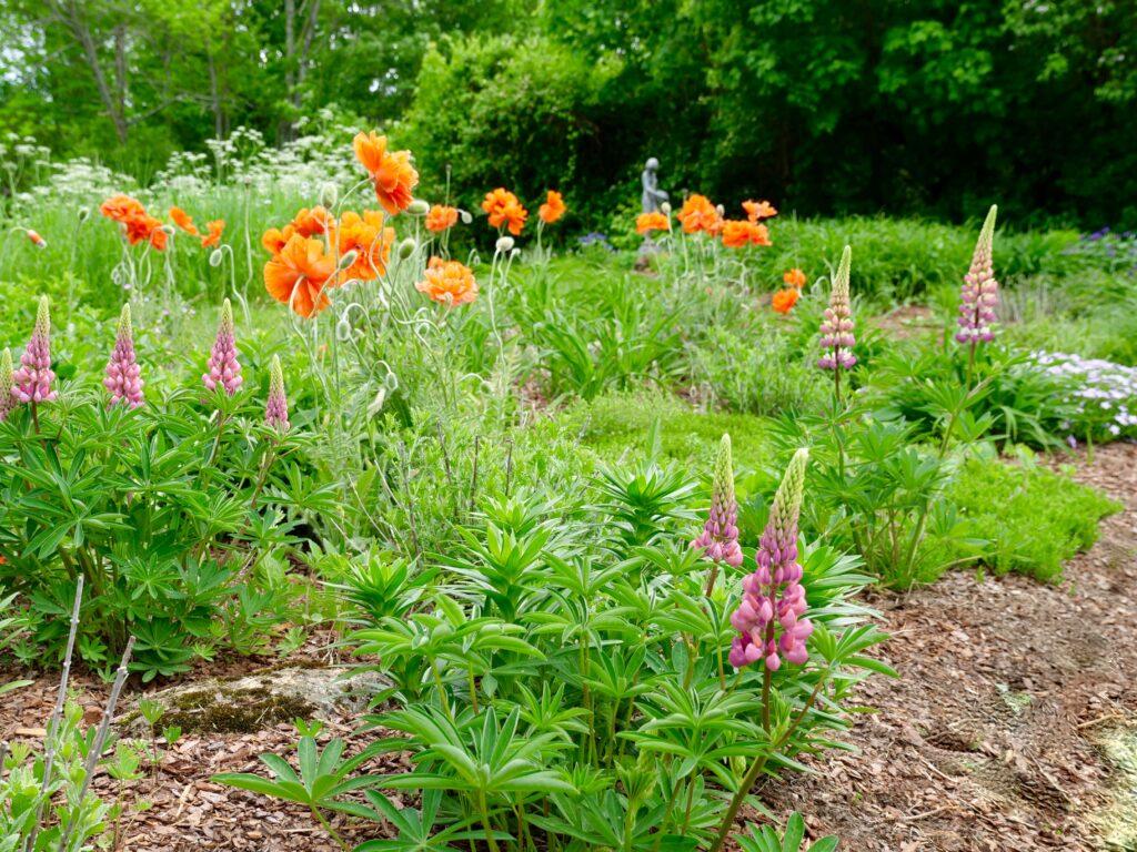 Spring Field Garden