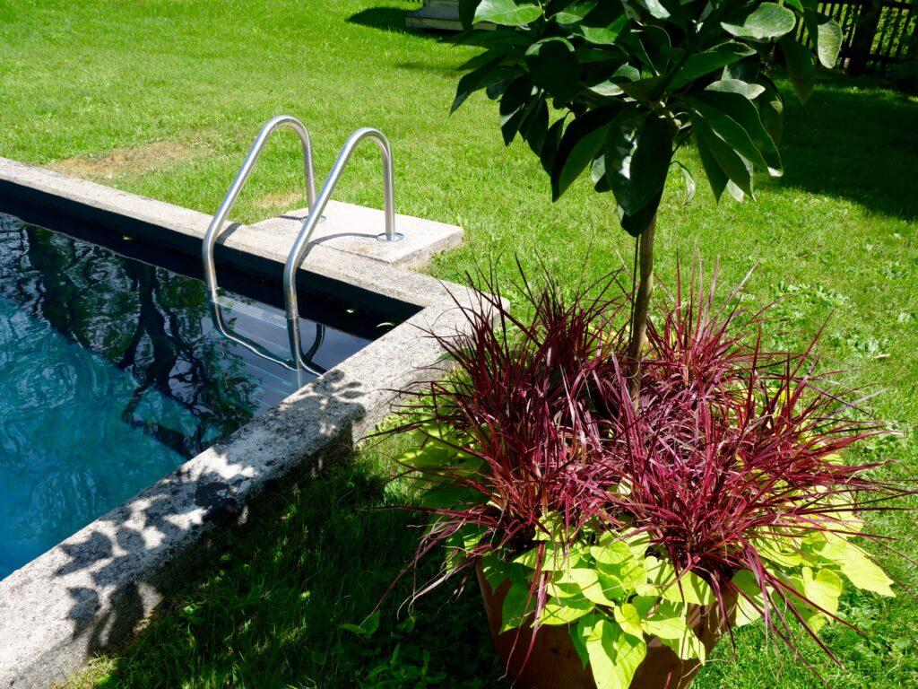 Summer Pot with Orange Tree Purple Grass and Yellow Potato Vine