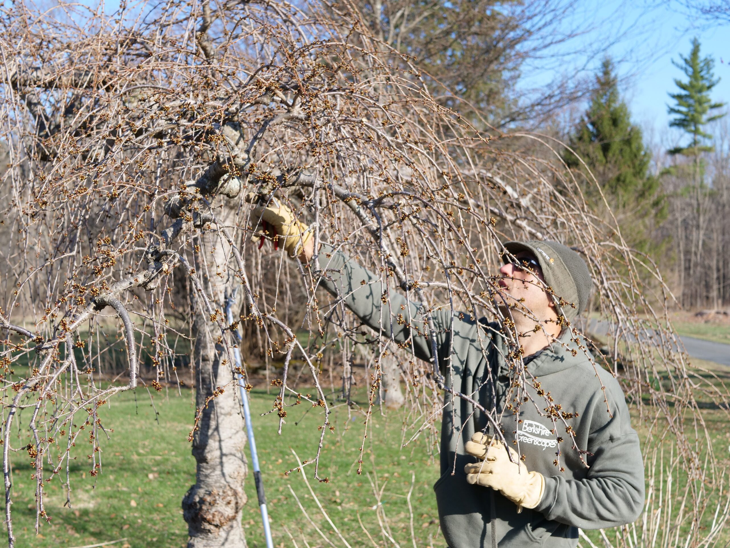 Read more about the article Just Keep Pruning… Just Keep Pruning…