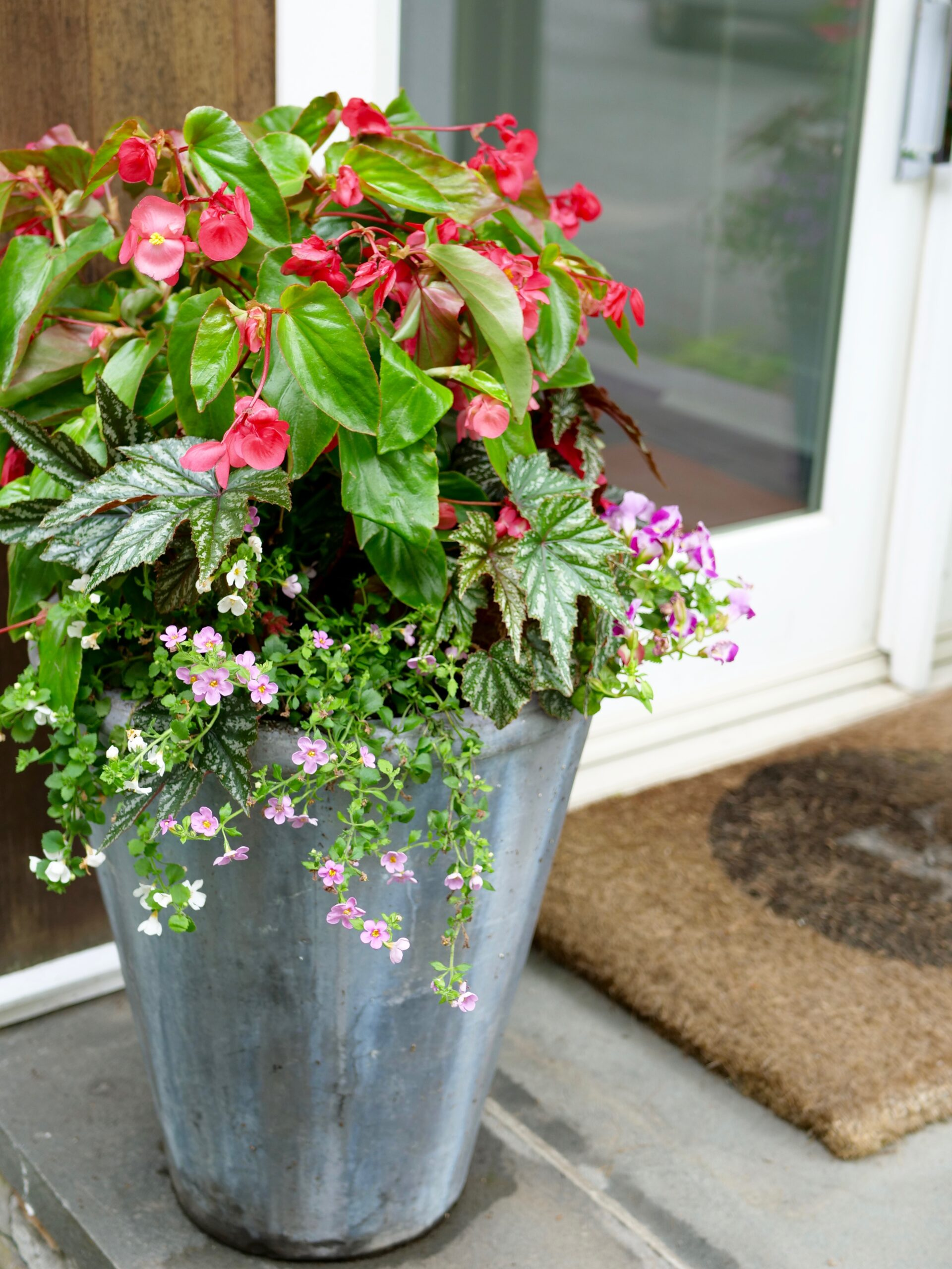 Read more about the article Summer Flower Pots
