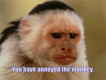 annoyed monkey