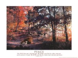 Grace Reflections Peace