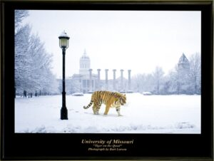 Grace Reflections Tiger on Quad