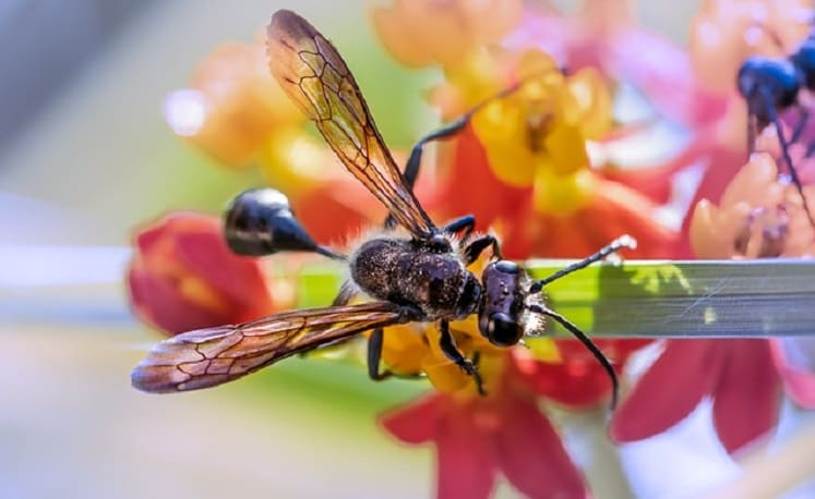 Why do Some Ants have Wings