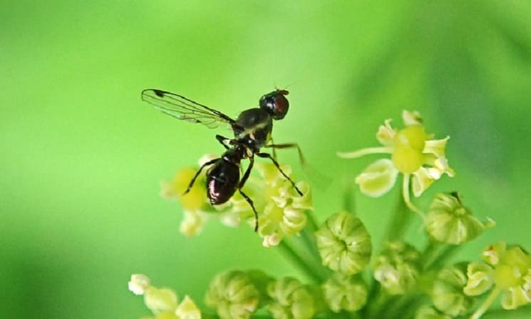 Why do Some Ants with Wings