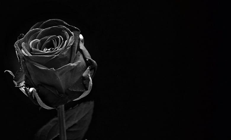Black Roses Meaning