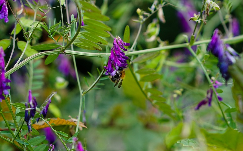 Leguminous Plants Guide - 10minutesformom