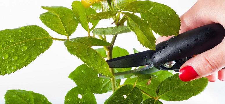 plant trim