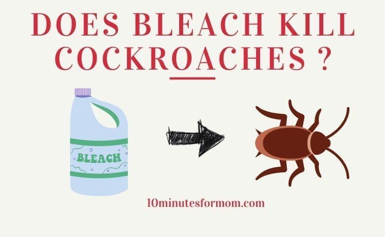 Does Bleach Kill Cockroaches