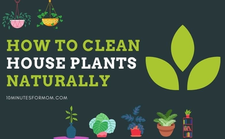 How to Clean Houseplants Naturally