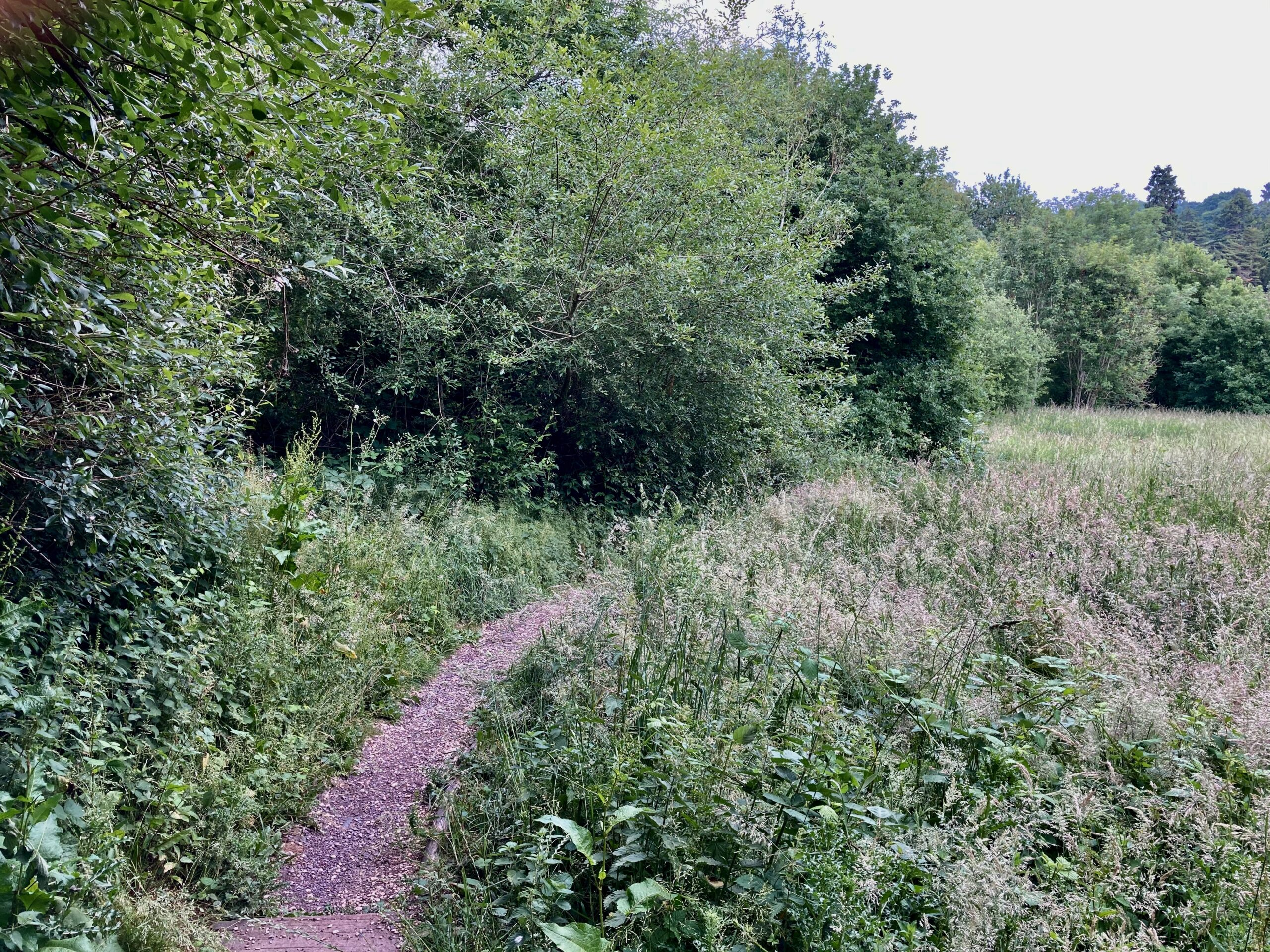 Path to Pond below the Down Well - June