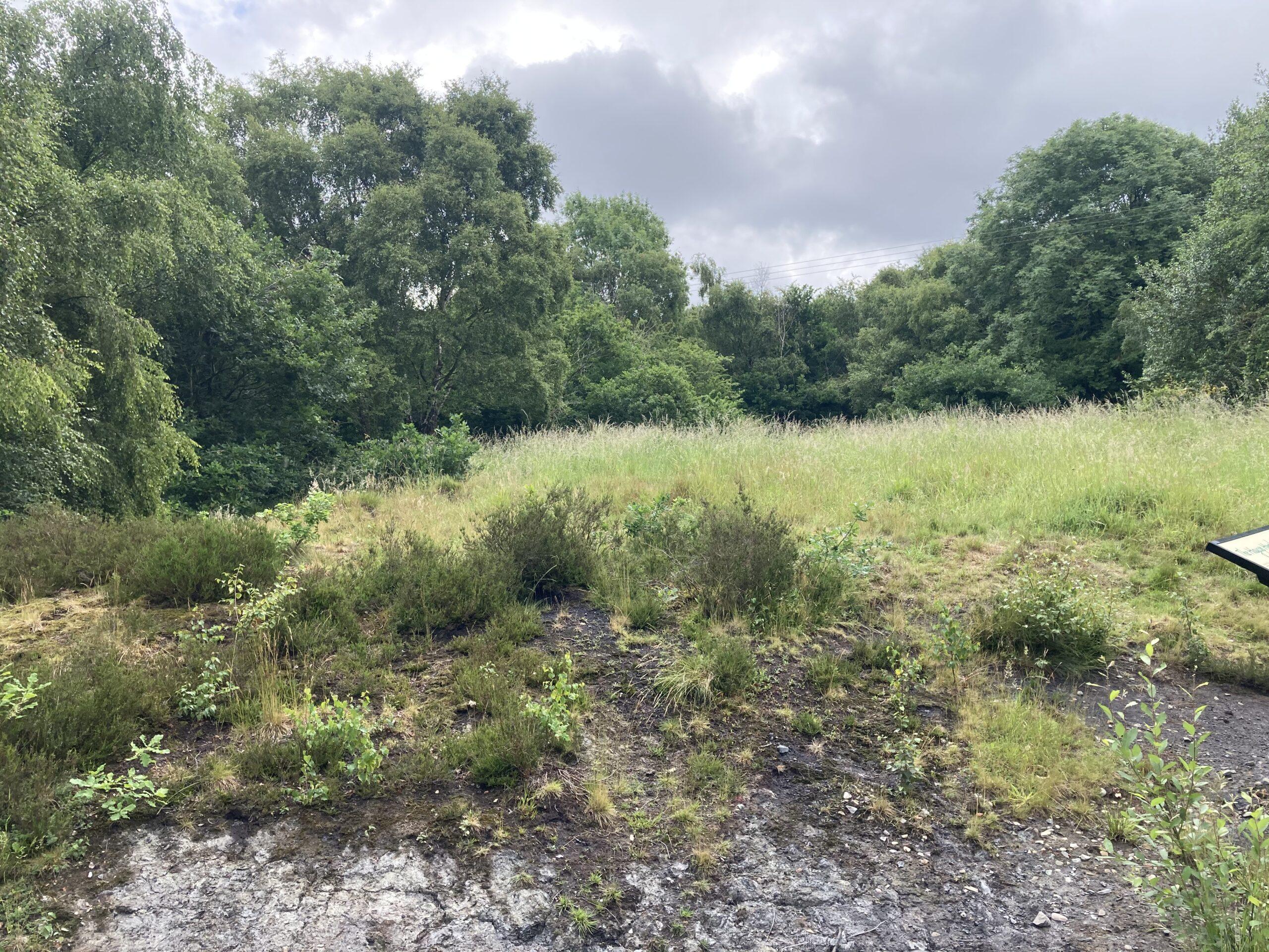 The Heath - June