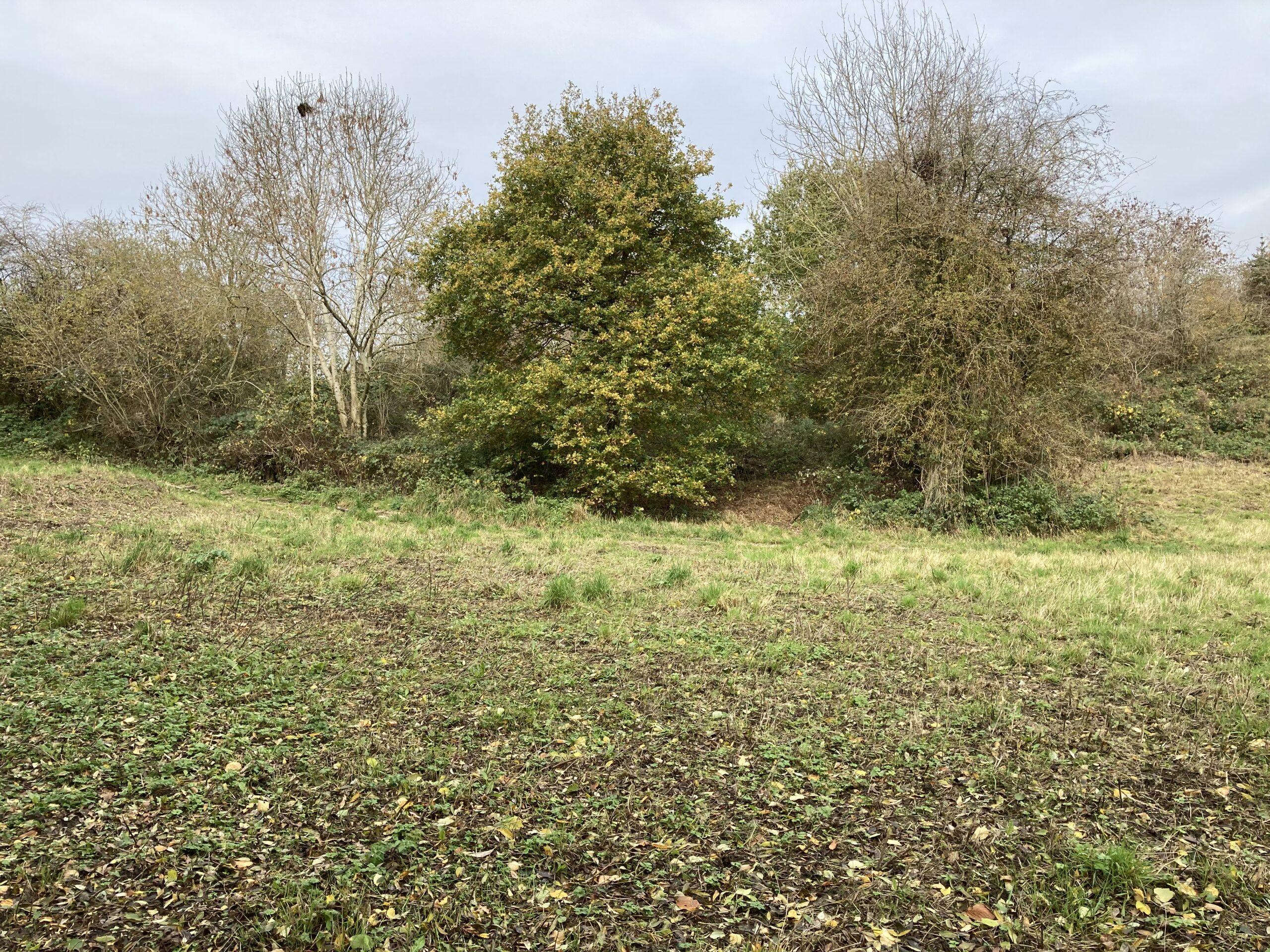 The Meadow - November