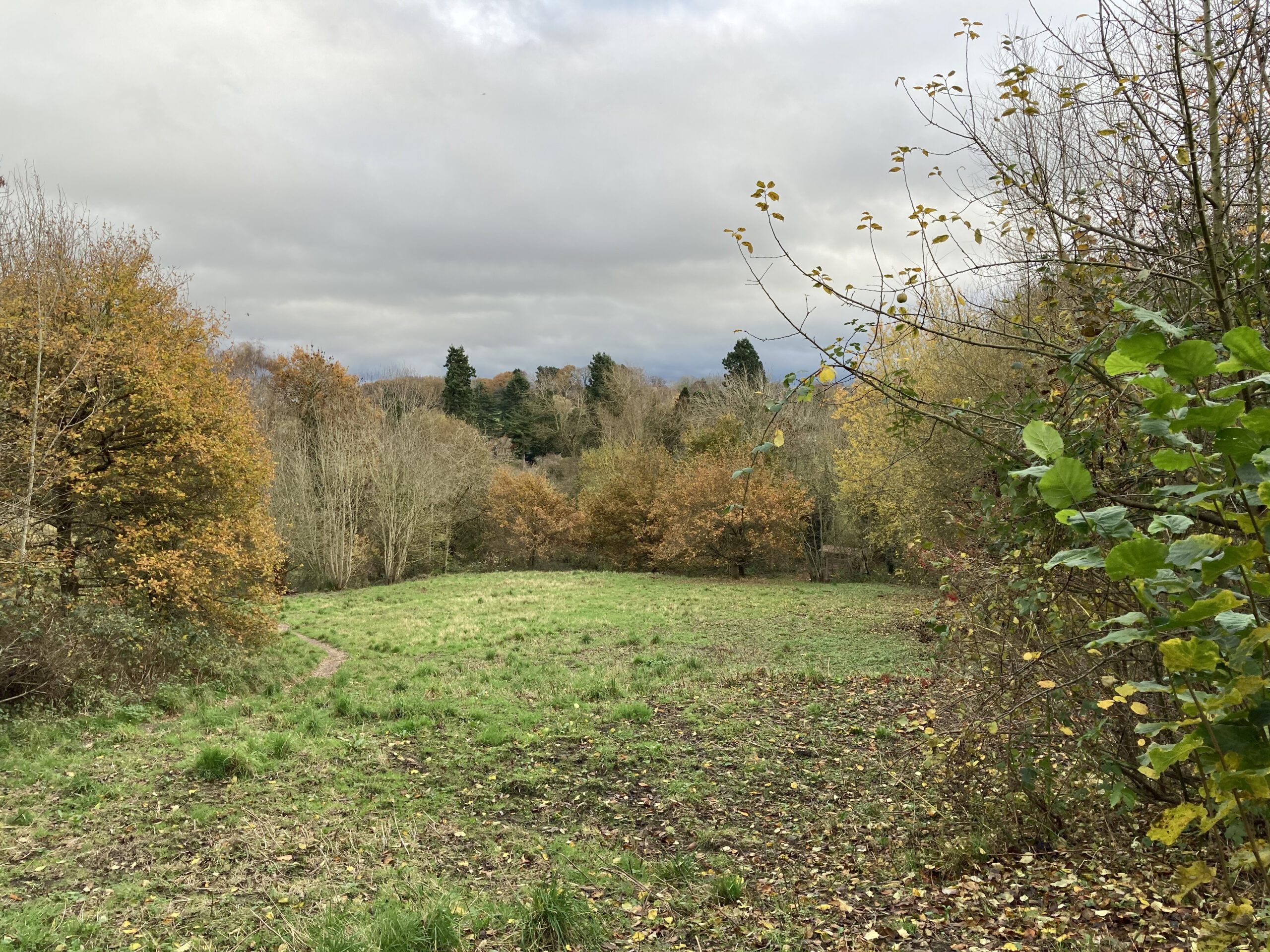 The Meadow from the Down Well - November