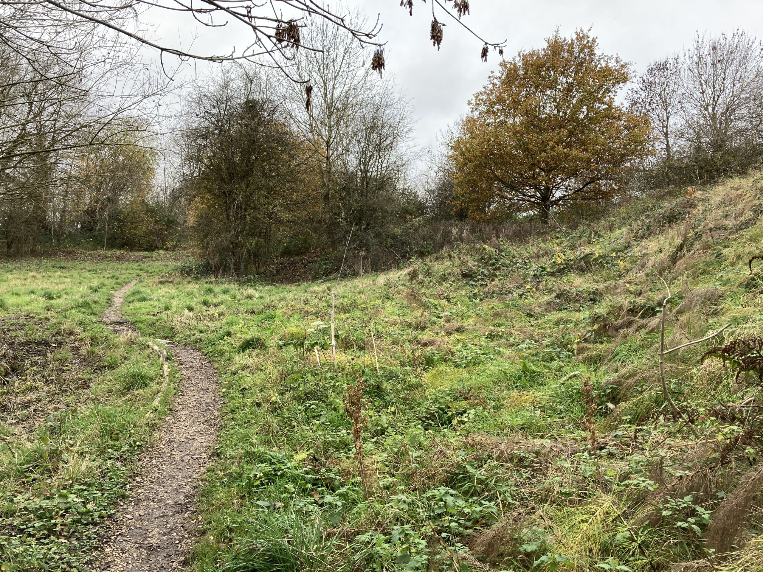 The path from the Down Well - November