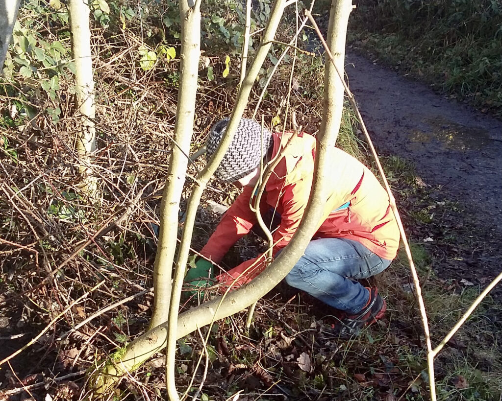 Ben Roberts Tree planting on the Bridle Way